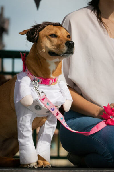 dogs in disney costumes leia