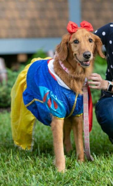 snow white disney dog costume