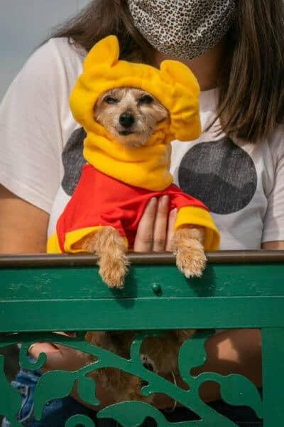 grouchy dog dressed as pooh bear
