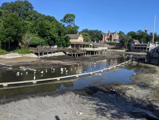 birds feast in the riverboat track area magic kingdom