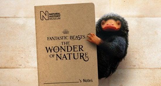 Fantastic Beasts The Wonders of Nature