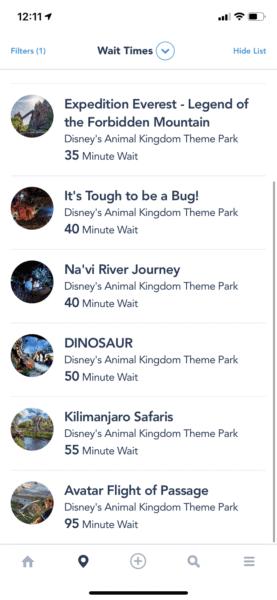 animal kingdom wait times