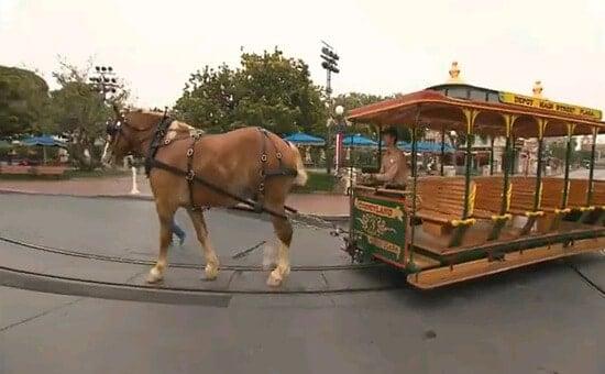Disneyland Horses