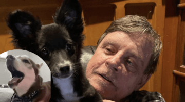 mark hamill with his pet dog and singing husky inset