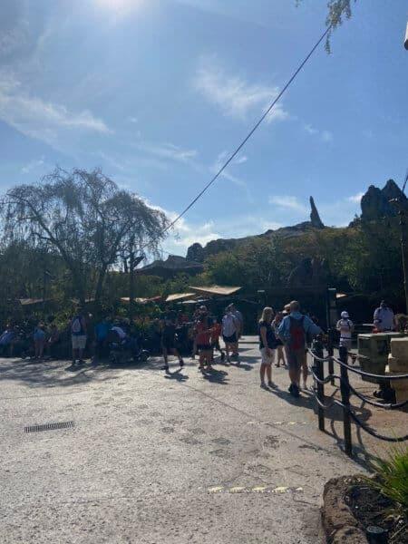 hollywood studios crowds