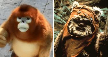 Ewok Monkey