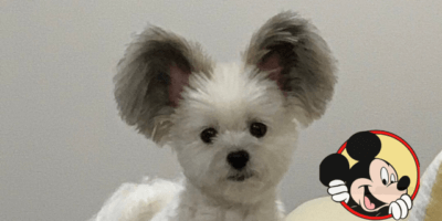 mickey mouse dog goes viral
