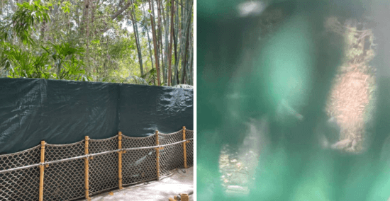 jungle cruise river drained