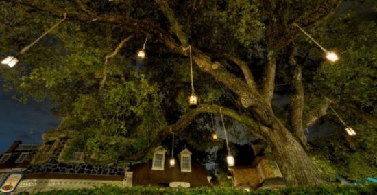 liberty square tree cover