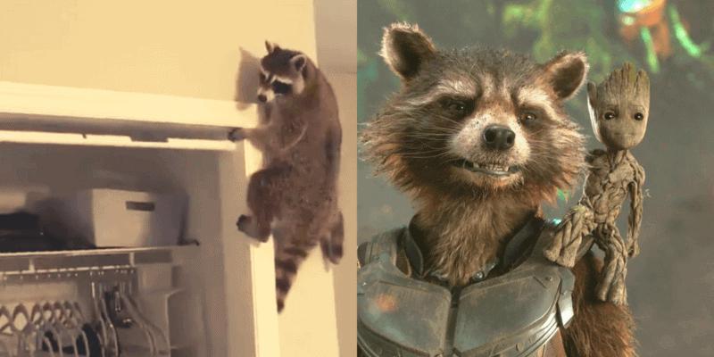 Credit: Left, Haley Iliff Twitter, Right, Marvel Studios