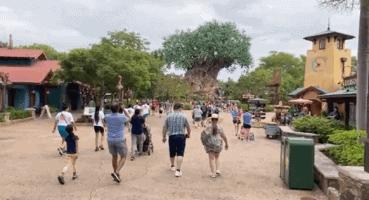 animal kingdom crowds