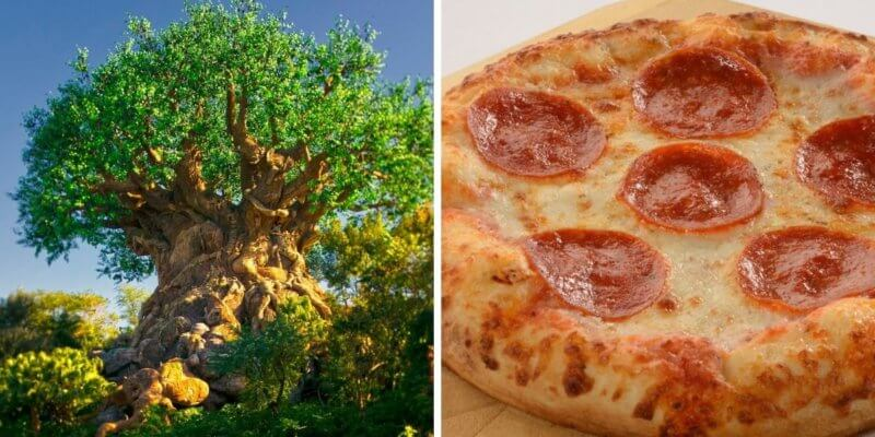 tree of life (left) pizzafari pizza (right)
