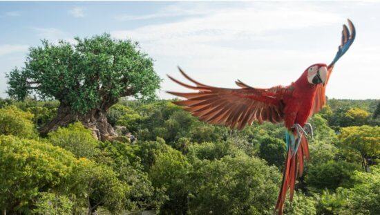 The Tree of Life in Disney's Animal Kingdom
