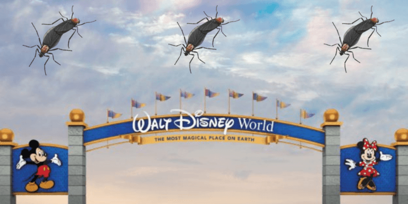Disney World Lovebugs