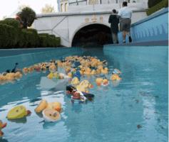 Rubber duck races