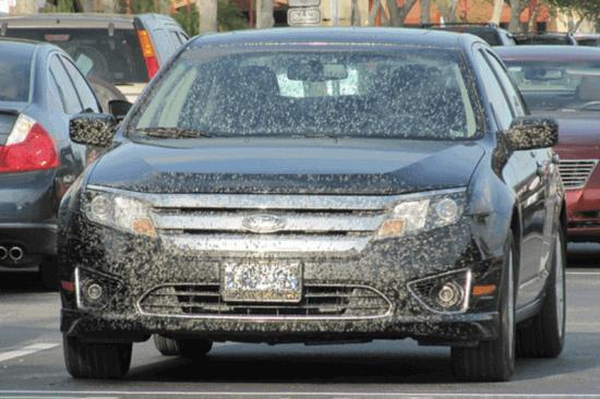 Lovebug Car