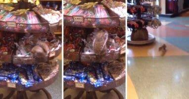 squirrel steals candy disney world