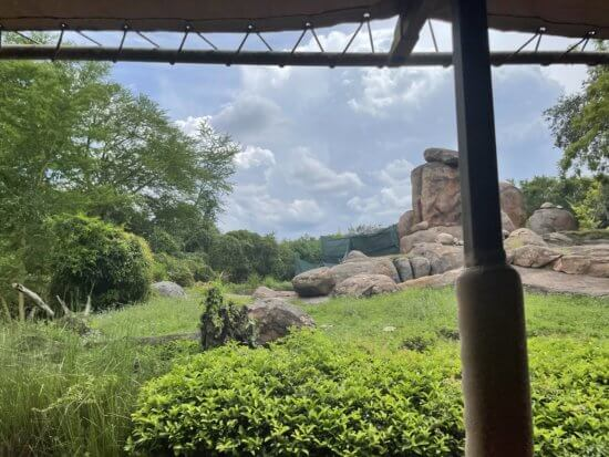 empty lion enclosure at disney's animal kingdom