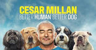 Cesar Millan Better Human Better Dog
