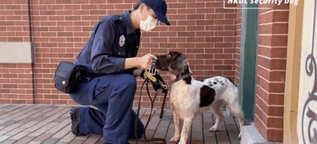 disney dog james