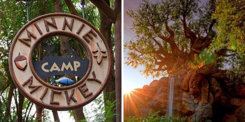 minnie mickey camp reino animal
