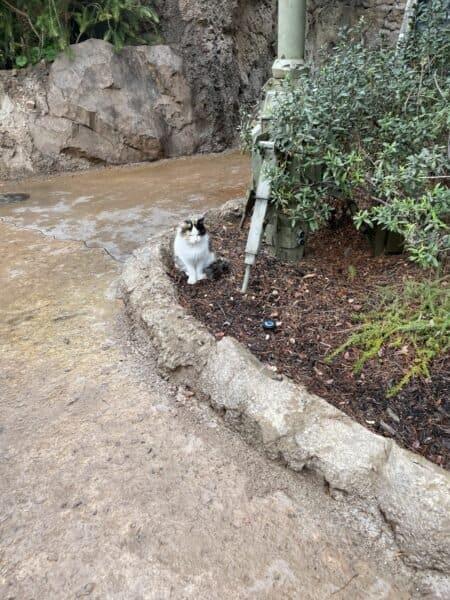 disneyland cats