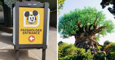 annual pass sign (left) animal kingdom tree (right)