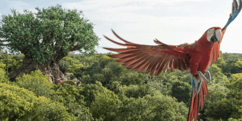 animal kingdom bird