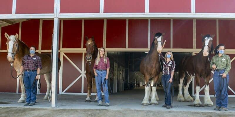 horses disneyland